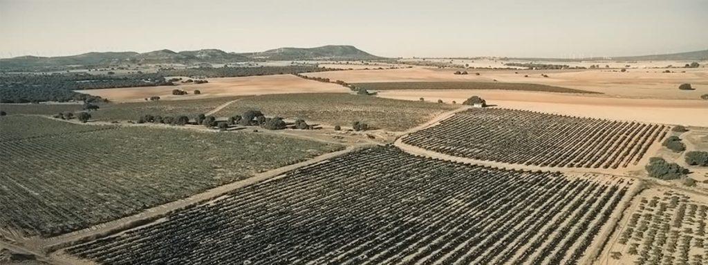 PORTADA CANO BODEGA VINOS ALMANSA ALBACETE ENOTURISMO